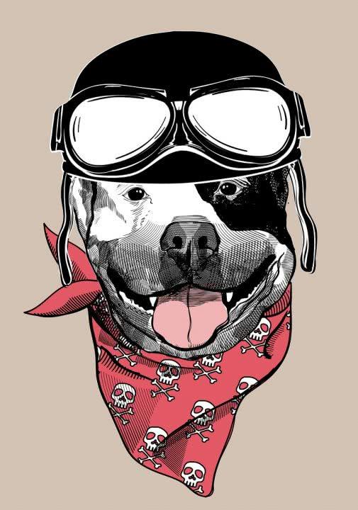 16 февраля — китайский Новый год. Астролог Кевин Фунг поведал, что подготовила Желтая Собака для каждого знака.
