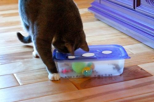24 идеи для развлечений вместе с котом. Устрой своему любимцу раздолье в домашних условиях.