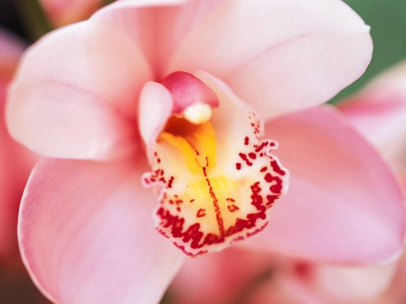 8 истин о клиторе, которые неизвестны даже женщинам… Мы приоткроем завесу тайны!