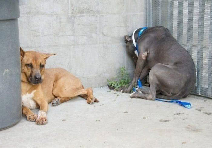 Если ты заметил, что питомец делает ЭТО, быстрей веди его к ветеринару!