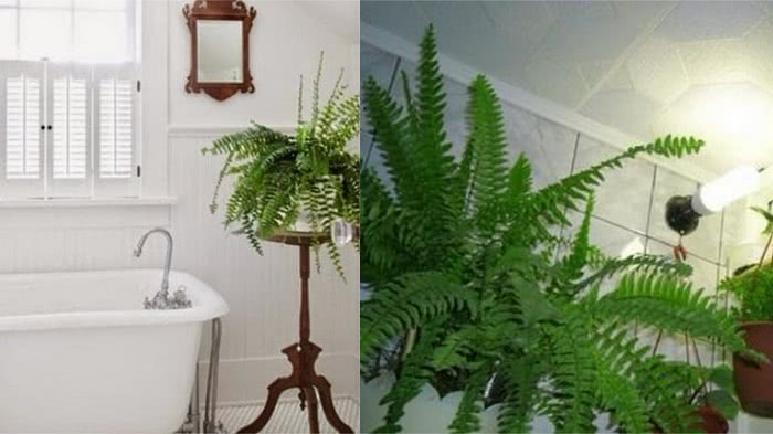 Этим 10 интерьерным растениям будет комфортно даже в ванной комнате без окна. Никогда бы не подумала, что…