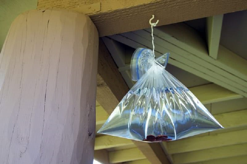 Как избавиться от надоедливых мух, не причиняя им вреда. Самый безобидный способ!