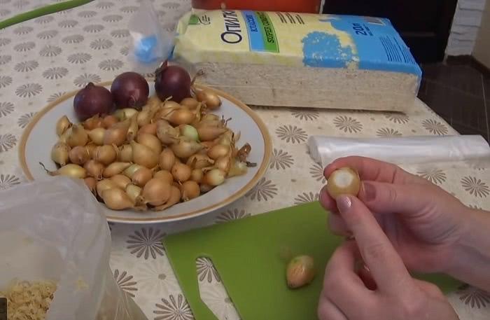Как выращивать зеленый лук дома круглый год