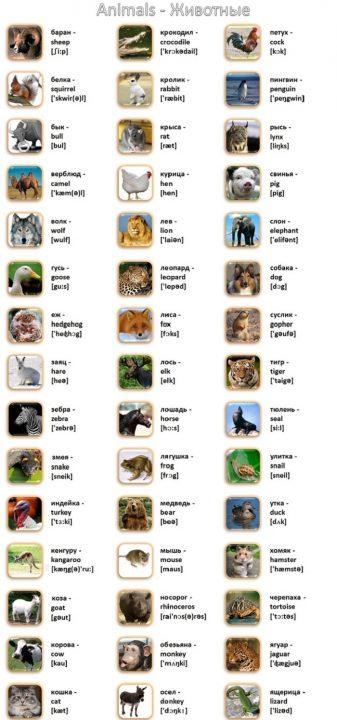 Картинки, которые вдохновляют на учебу! 50 новых слов за один вечер.