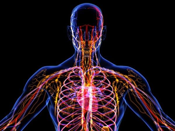 Неизведанные факты о лимфатической системе, которые полезно знать каждому.