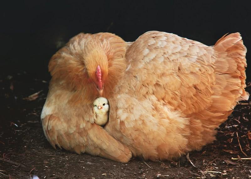 Вот что происходит с твоим организмом, если ты не ешь яйца постоянно! Всего лишь 1 куриное яйцо в день…