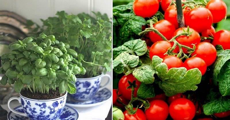 Вот как выращивать свежие зелень и овощи даже не в сезон! Все будут умолять поделиться.