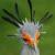 Птах секретар: Самотній лицар в зміїному гнізді